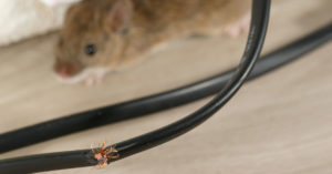 keep pests out of your heating and air system